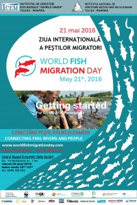 Afis pesti migratori 2